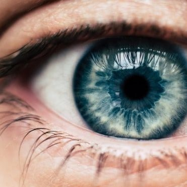 Powierzchnia oka z widocznymi gruczołami meiboma oraz rzęsami